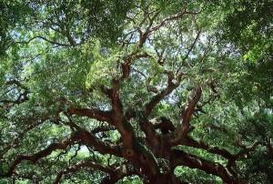 ceci n'est pas une (binary) tree